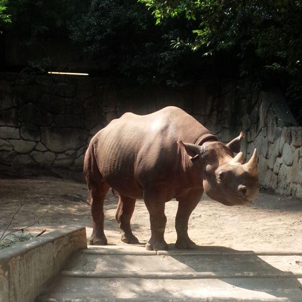 中島らもと上野動物園について古本買取クラリスブックス